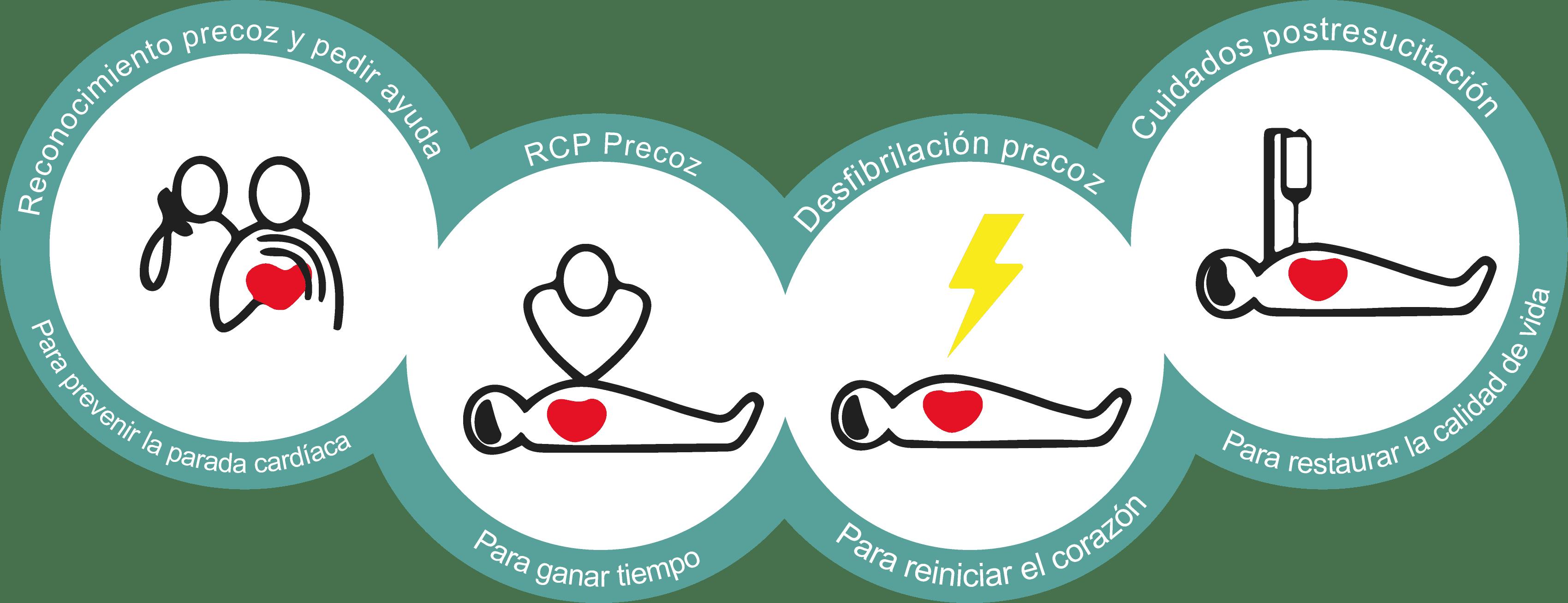 fases del soporte vital básico
